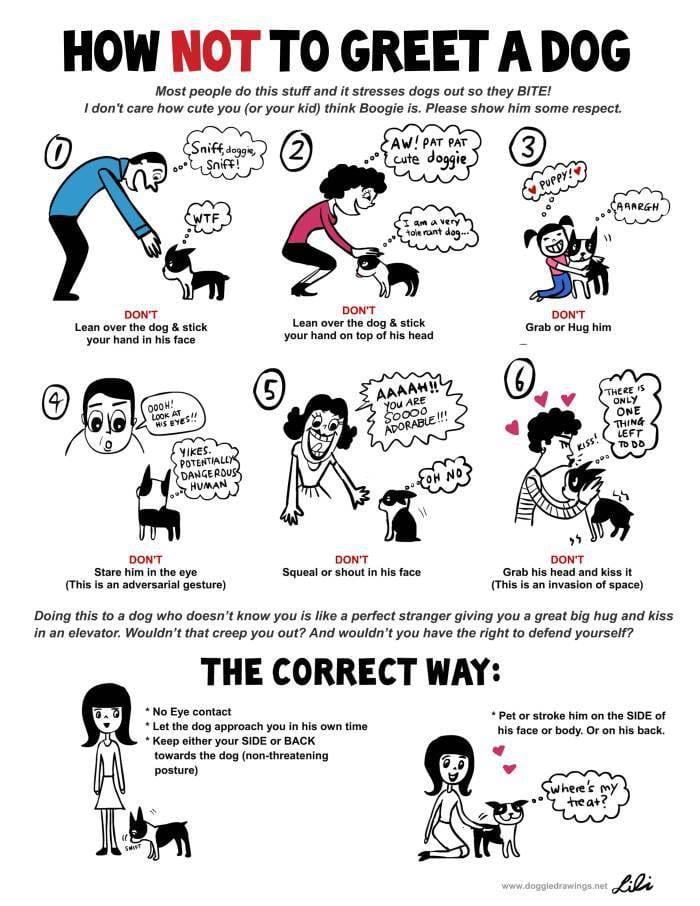 Wie Hunde (nicht) begrüßt werden sollen