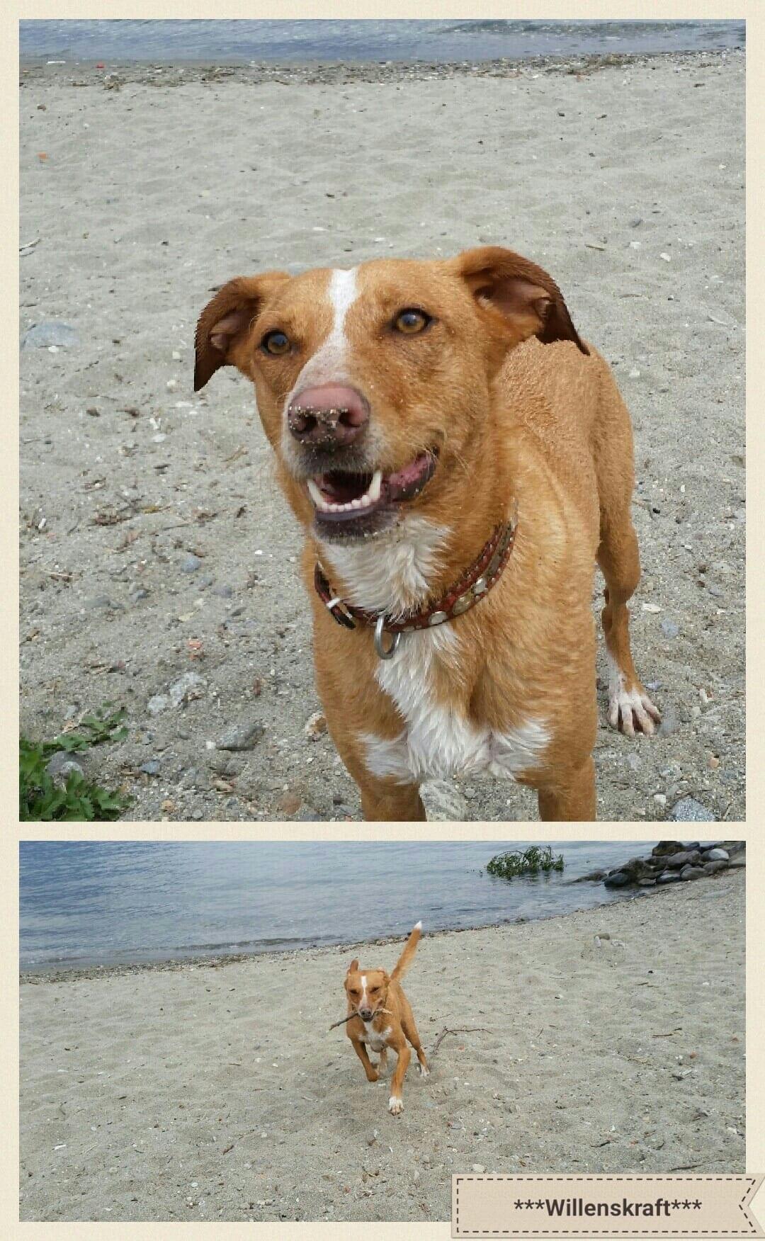 Hund Lago Maggiore