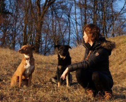 Hundeschule Willenskraft