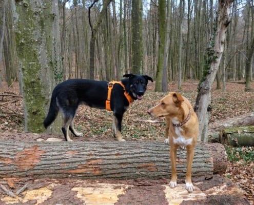 Freie Bewegung Hund. DIe Grundbedürfnisse der Hunde