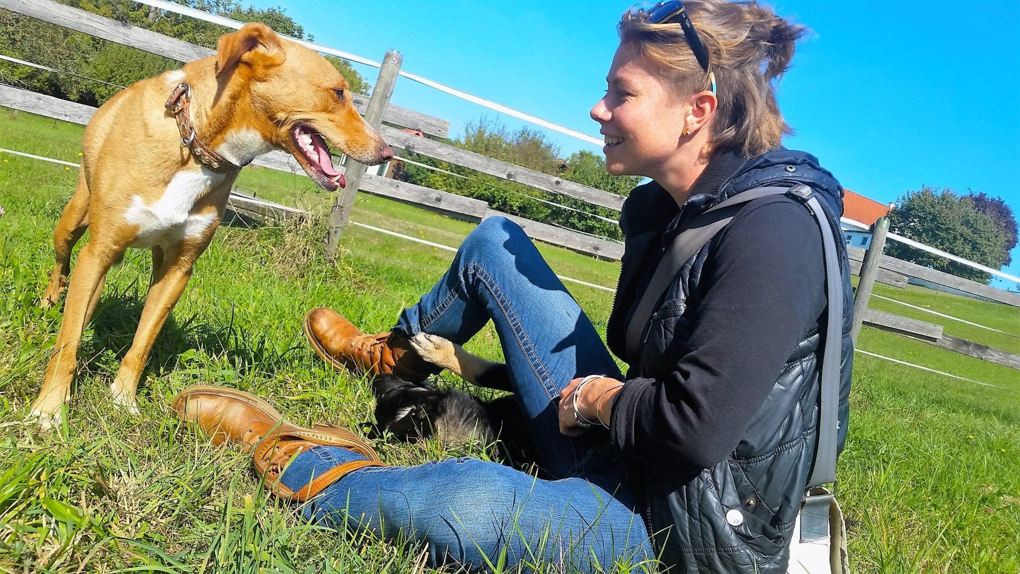 Imkermeile Hatzendorf Hundeschule Willenskraft