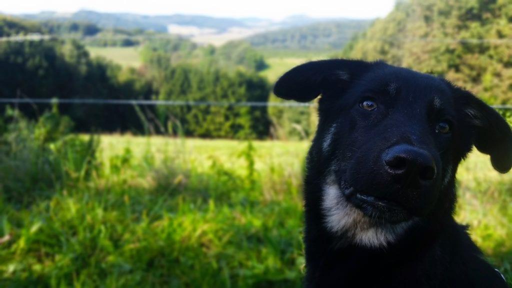 Wandertag Imkermeile Willenskraft Hundeschule2