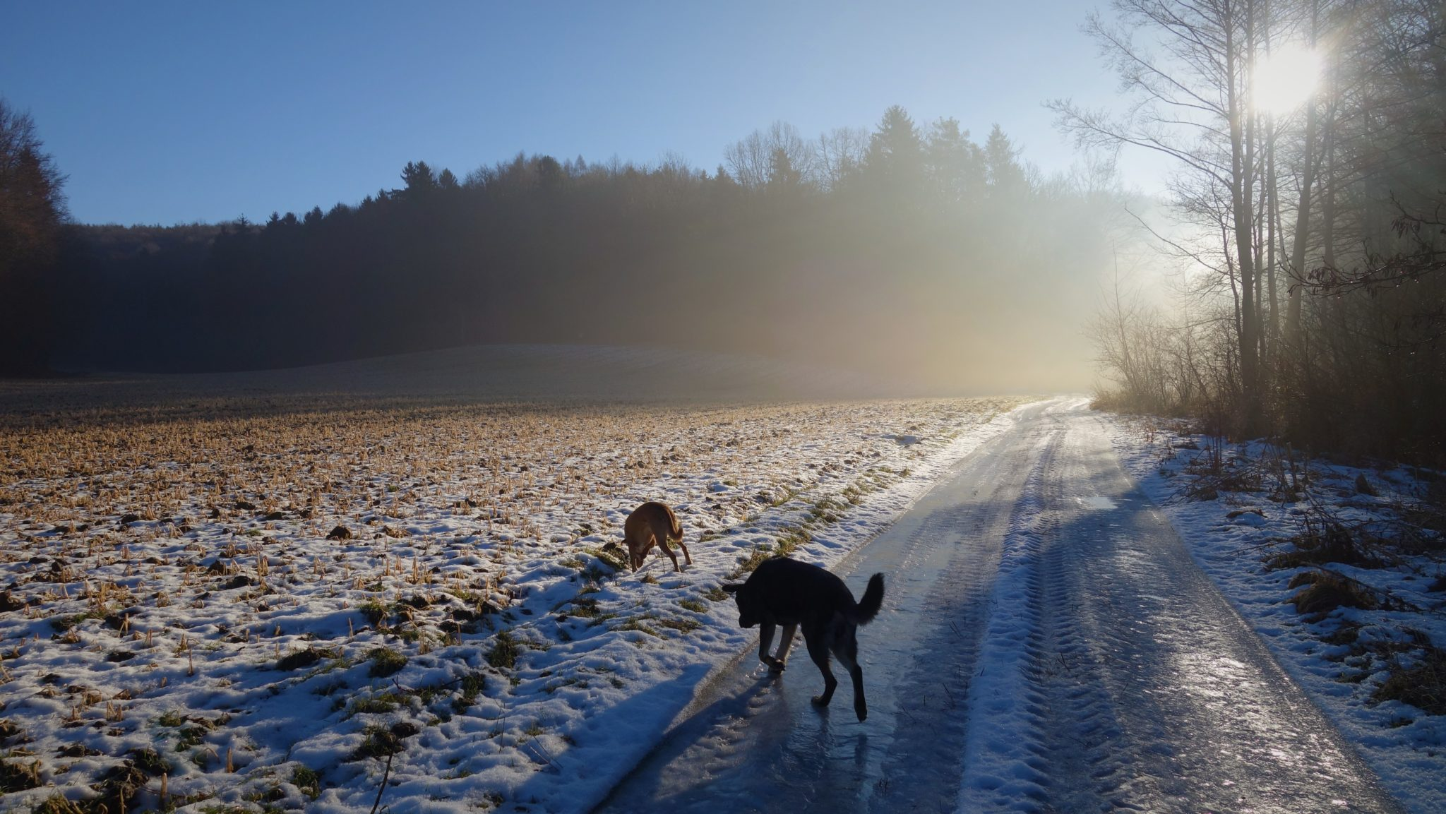 Spaziergang mit Hunden Feldbach