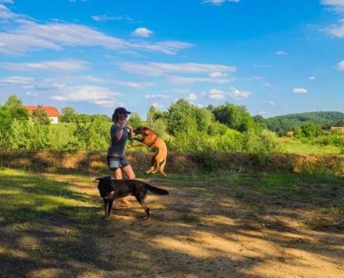 Hundeerziehung: Mentale und körperliche Azslastung