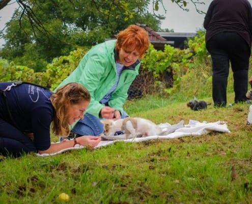 Welpenschule, Einzeltraining, Hundeerziehung