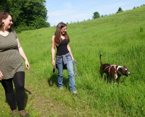 Praxis-Phase Hundetrainerinnen Ausbildung