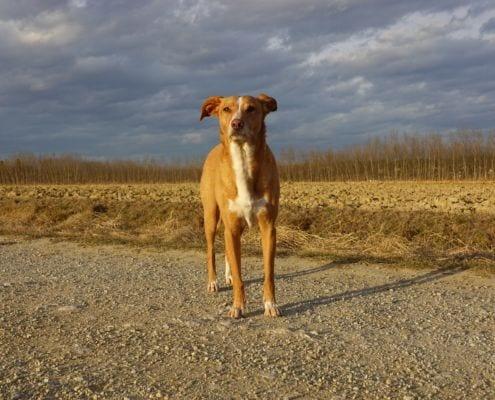 Philosophie der Hundeschule Willenskraft