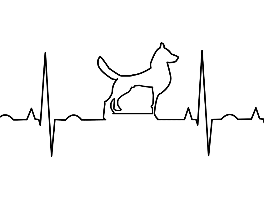 Hund Medizin