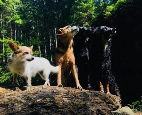 Hunde Nemeth