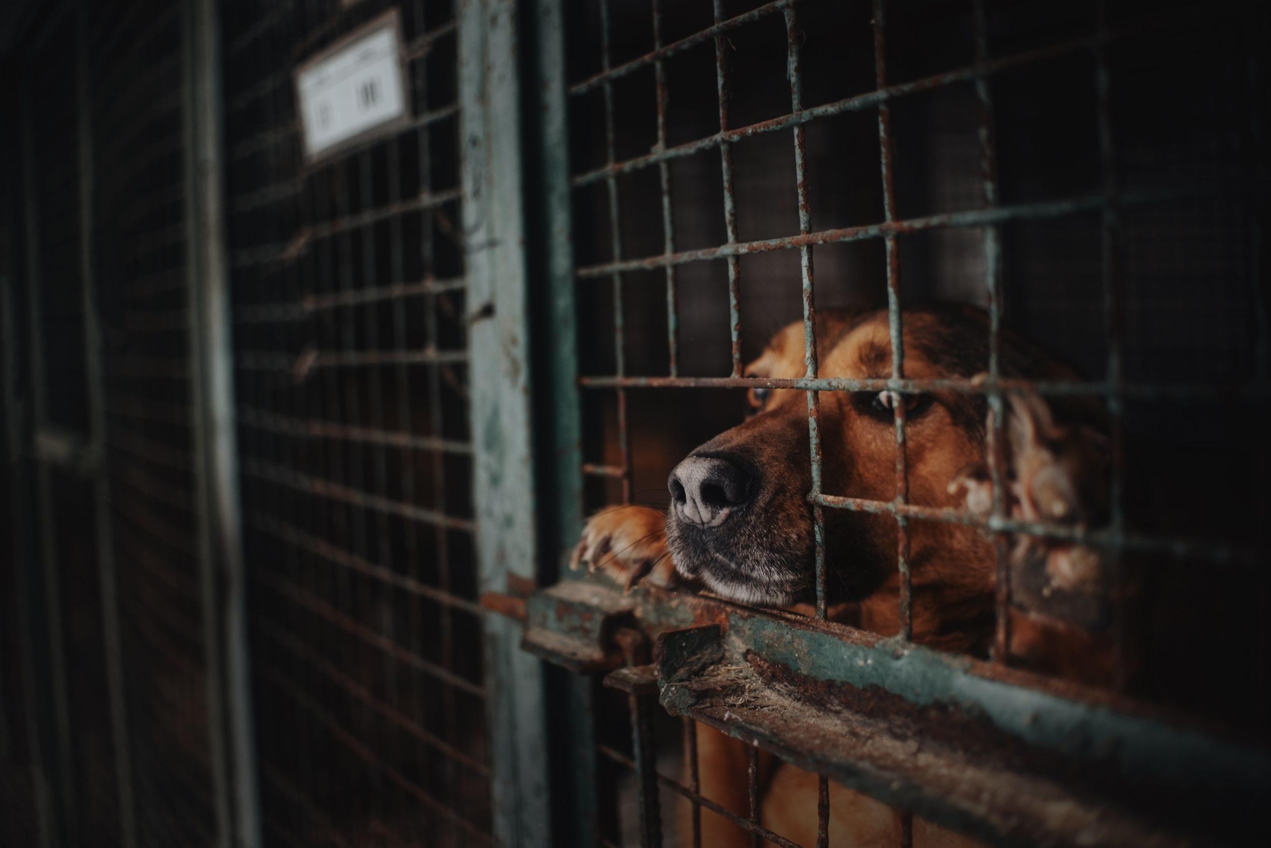 Hund aus dem Ausland Tierschutz