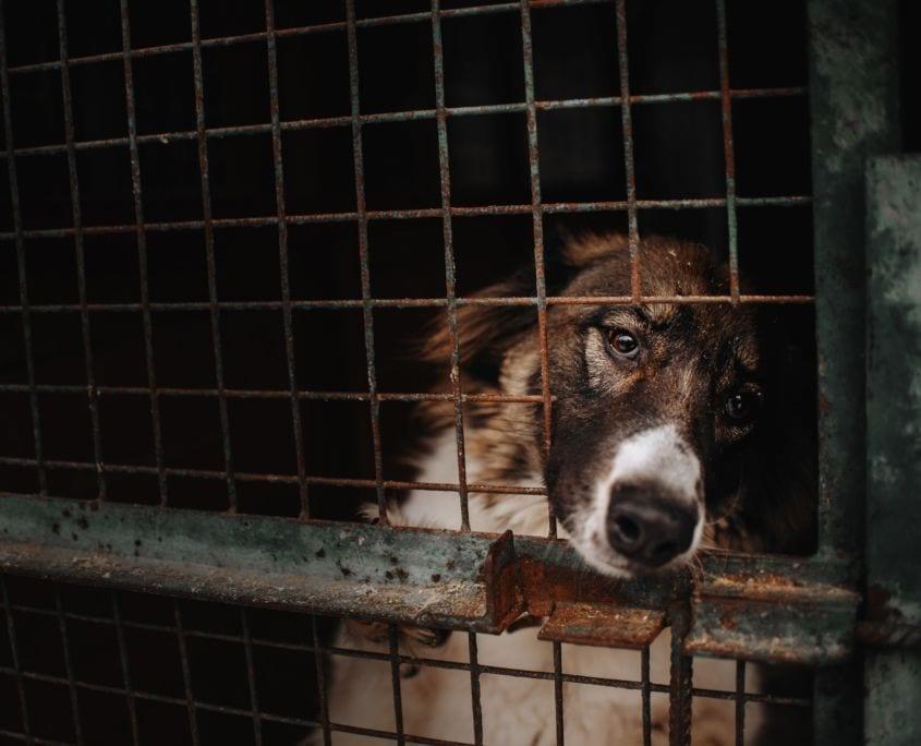 Tierschutzhund aus dem Ausland