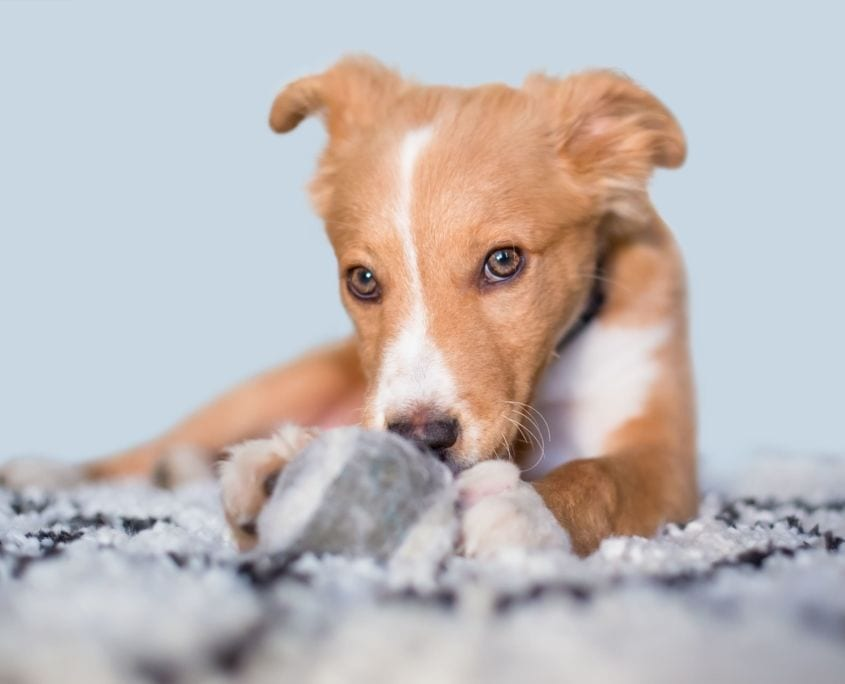 Angebot Hundeschule Willenskraft Graz