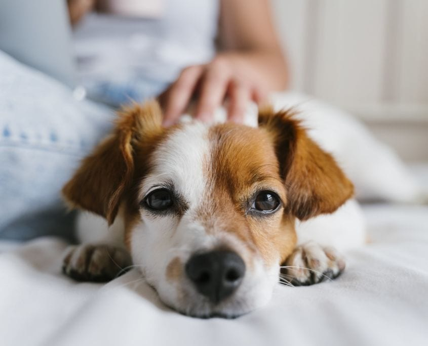 Tierschutzhunde Spezial
