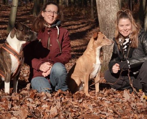 Hundeschule Willenskraft und Akademie
