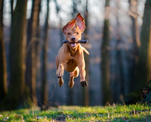 Hundeschule Willenskraft Thermenland