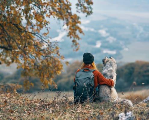 Hundeschule Willenskraft Burgenland
