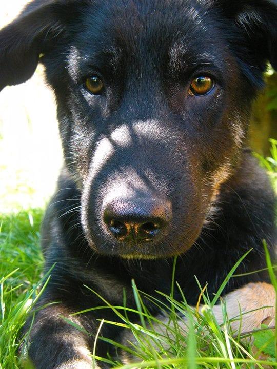 Kahli neuer Hund